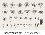 set. cherry flowers  leaves and ... | Shutterstock .eps vector #774794998