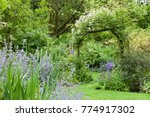 Colourful Summer Garden In...