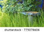 old wooden bench in the grass | Shutterstock . vector #775078606
