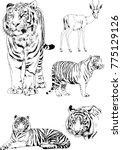 vector drawings sketches... | Shutterstock .eps vector #775129126