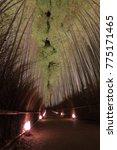 bamboo grove arashiyama kyoto... | Shutterstock . vector #775171465