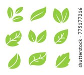 leaves icon vector set | Shutterstock .eps vector #775177216