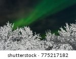 frost  snow on the trees.in the ... | Shutterstock . vector #775217182