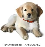 Stock photo the puppy golden labrador watercolor painting 775300762