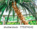 Big Palm Tree In Lounge  In...