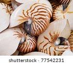 Nautilius Shells In Basket...