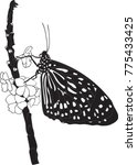 butterfly silhouette  black and ... | Shutterstock .eps vector #775433425