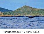 isla isabel a volcanic island... | Shutterstock . vector #775437316