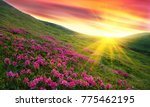 amazing colorful sundown in... | Shutterstock . vector #775462195