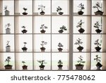 the collection of bonsai on the shelf