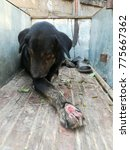 Small photo of Black stray dog with a leg wound lying on the rickshaw.
