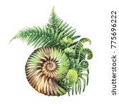 watercolor prehistoric seashell ...   Shutterstock . vector #775696222