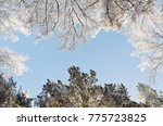 winter forest landscape on a... | Shutterstock . vector #775723825