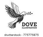 dove of the world   a pigeon in ... | Shutterstock .eps vector #775775875