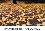 autumn landscape in a rainy day.... | Shutterstock . vector #775805422