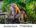 monkey naughty monkey