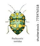 watercolor illustration of...   Shutterstock . vector #775976518