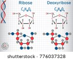 ribose and deoxyribose... | Shutterstock .eps vector #776037328