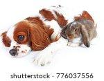 animal friends. true pet... | Shutterstock . vector #776037556