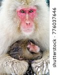 mother and baby japanese... | Shutterstock . vector #776037646