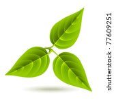 three green leaves on white... | Shutterstock .eps vector #77609251