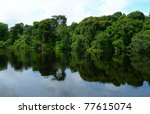 Rain Forest Mirrored In Waters...
