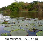 Rain Forest Mirrored In A...