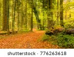impression of the gr5 trail in... | Shutterstock . vector #776263618