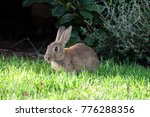 Stock photo rabbit in the garden 776288356