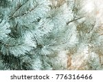 winter natural background with...   Shutterstock . vector #776316466