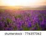 sunset over a violet lavender... | Shutterstock . vector #776357362
