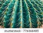 Thorn Cactus Texture Backgroun...