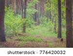 beautiful green forest in... | Shutterstock . vector #776420032