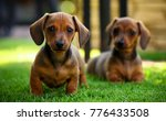 Stock photo puppy in the garden 776433508