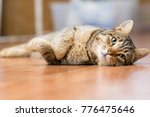 Stock photo gray adult mongrel cat lies on the floor stretching the front paws 776475646