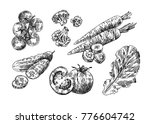 beautiful hand drawn... | Shutterstock .eps vector #776604742