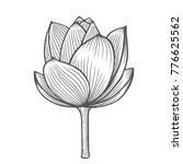 lotus flower illustration  line ... | Shutterstock .eps vector #776625562