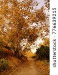 fall leaves on a hidden path | Shutterstock . vector #776639215