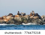 California And Steller's Sea...