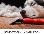 Small photo of Husky dog and big pile fur with dog comb. Brush for dog hair. Slicker brush.