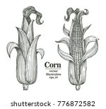 vector corn on the cob with... | Shutterstock .eps vector #776872582
