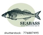hand drawn sketch seafood... | Shutterstock .eps vector #776887495