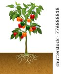 bell pepper plant with root... | Shutterstock .eps vector #776888818
