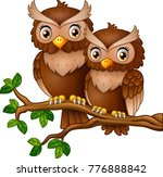 cute couple owl on the tree...