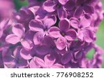 macro image of spring soft... | Shutterstock . vector #776908252