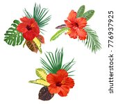 hibiscus flowers and tropical...   Shutterstock .eps vector #776937925