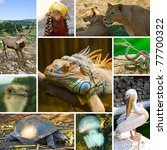 Collage Of Animals Images  ...