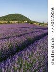 Lavender Field Chapel Montagne De - Fine Art prints
