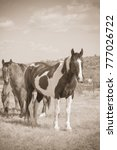 horses on a ranch in... | Shutterstock . vector #777026722