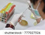 streak and stab bacteria in... | Shutterstock . vector #777027526